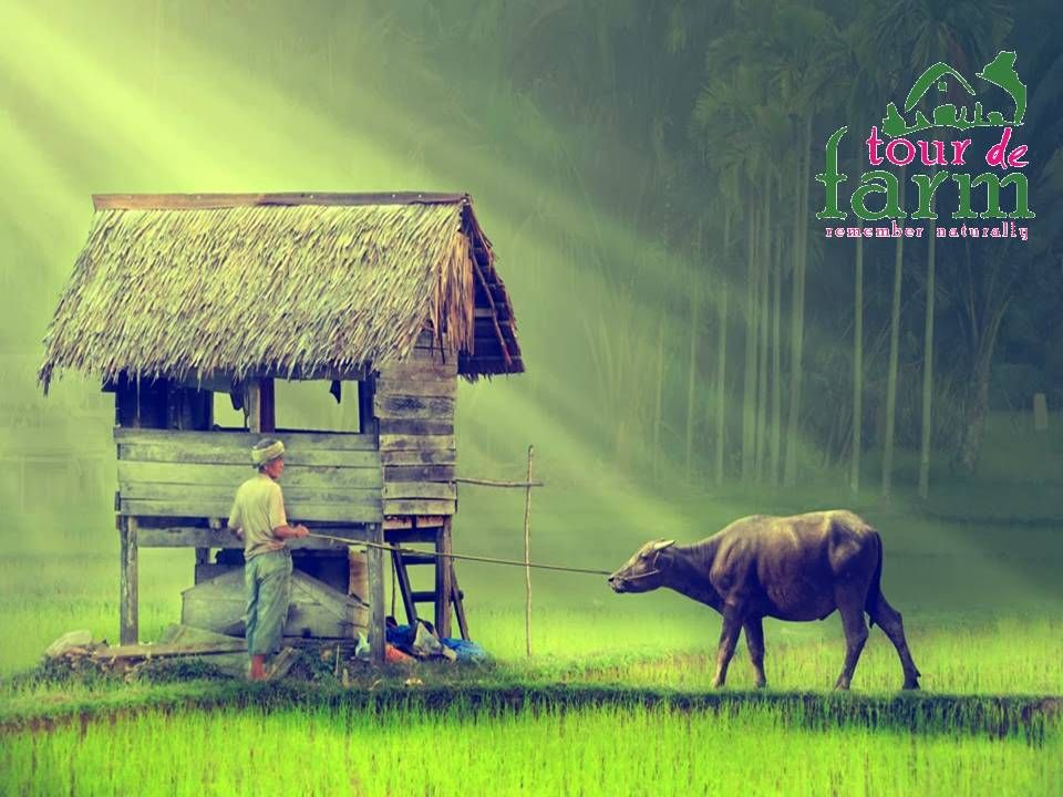 HappyKisanDiwas Farmers are the real backbone of India