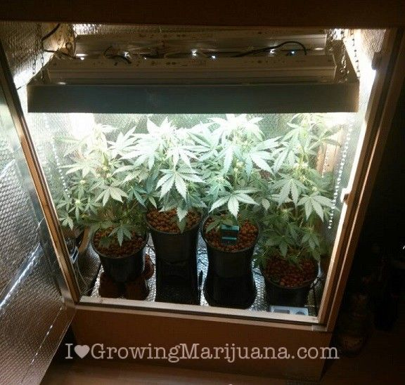 How To Build An Indoor Marijuana Grow Room Check It Out For More Info Https: Part 91