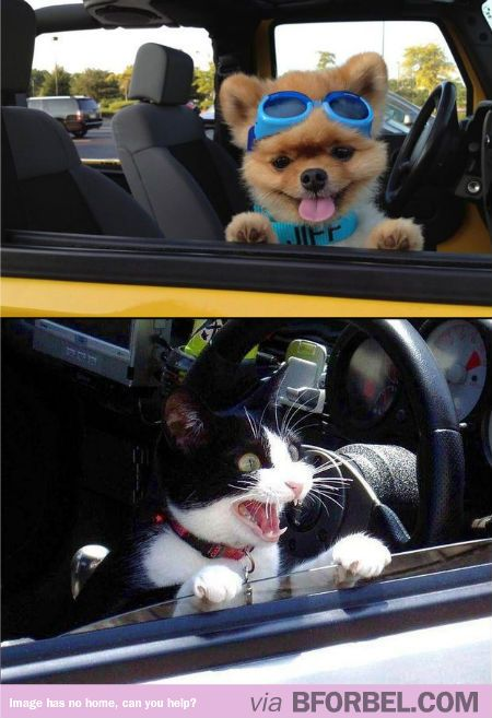 Car Rides Dogs Vs Cats It S Funny Cause It S True Cat Vs Dog