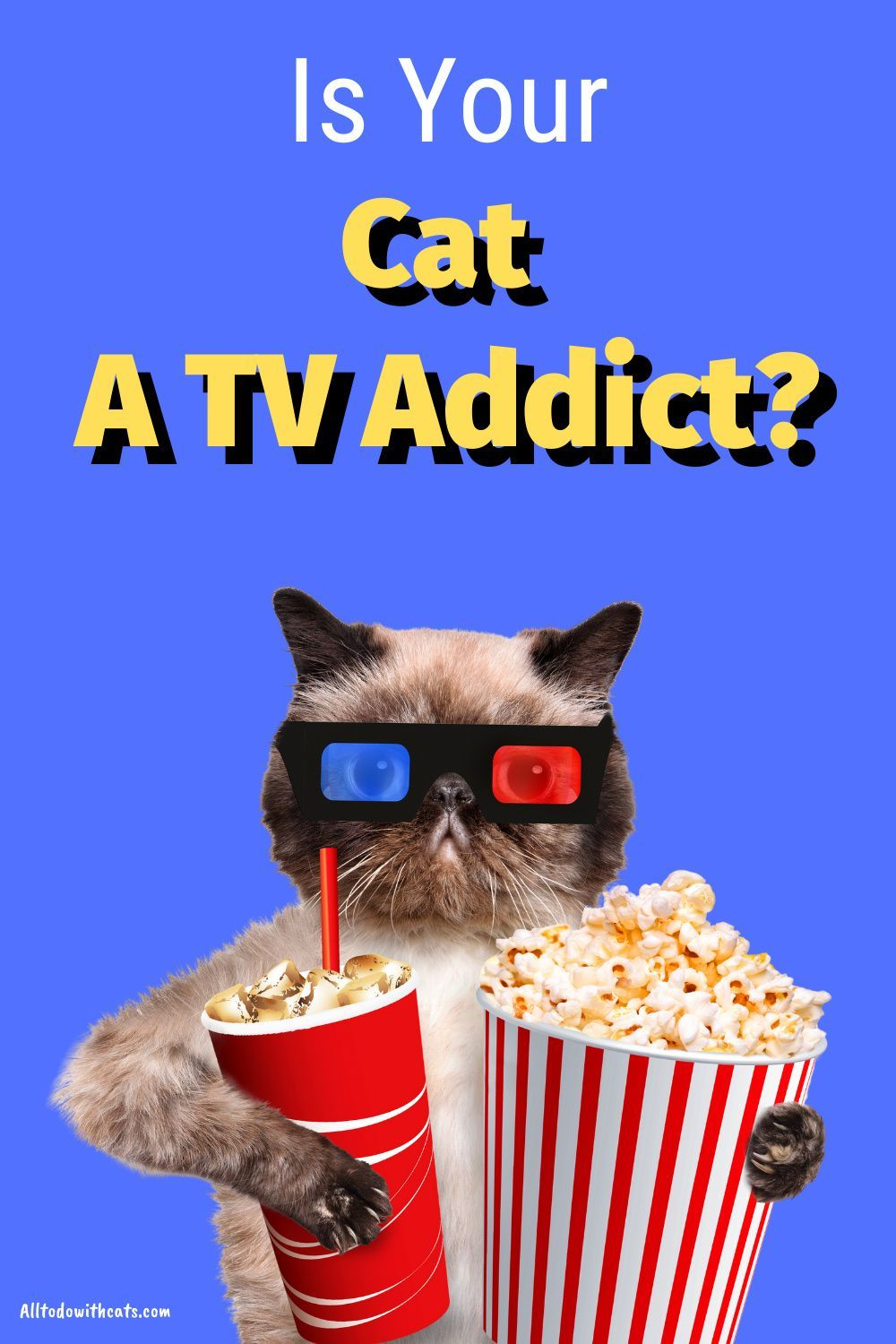 Can Cats Watch TV? You'll be surprised at what your cat