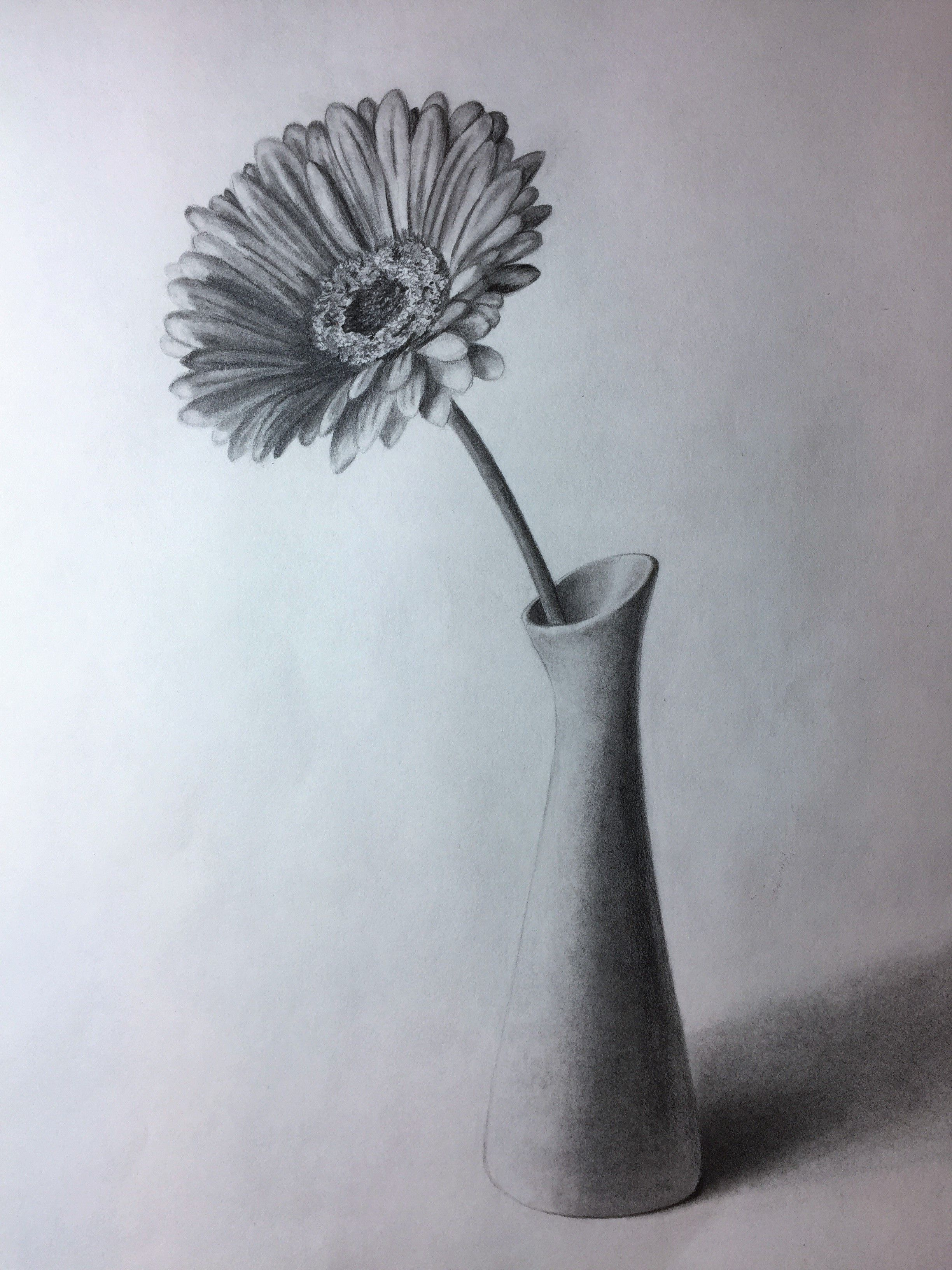 Gerbera in a vase. Graphite/pencil drawing by Elena