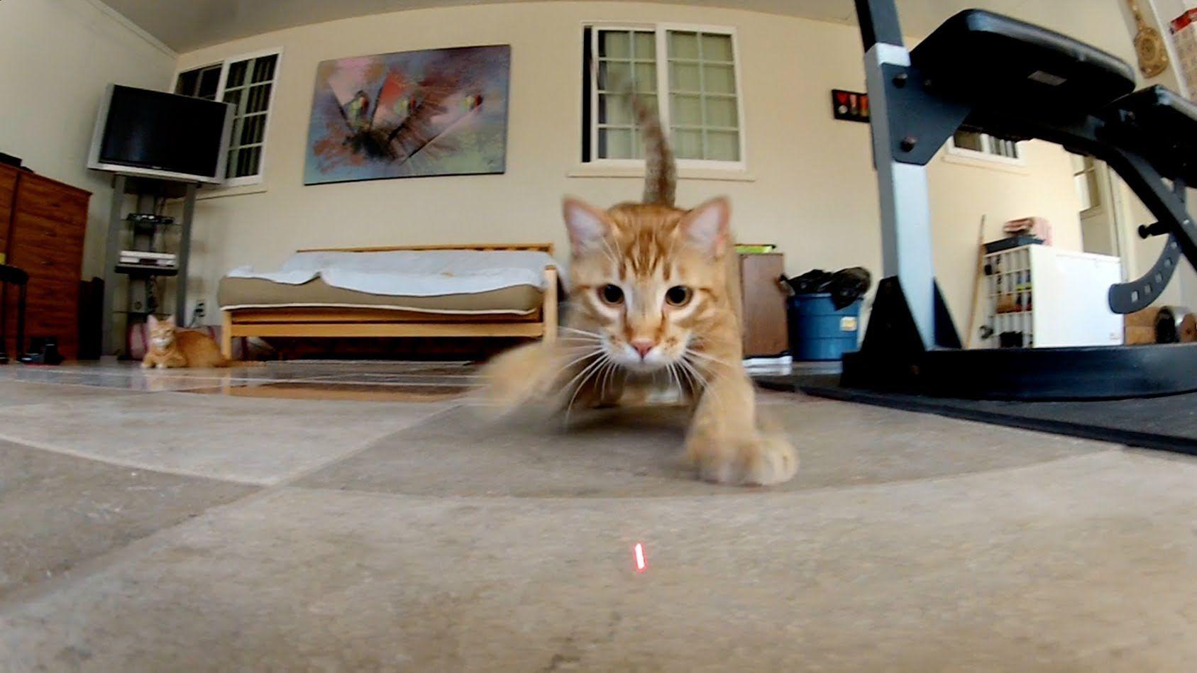 Kittens Vs. Laser Battle Of Cuteness Kittens, Cats