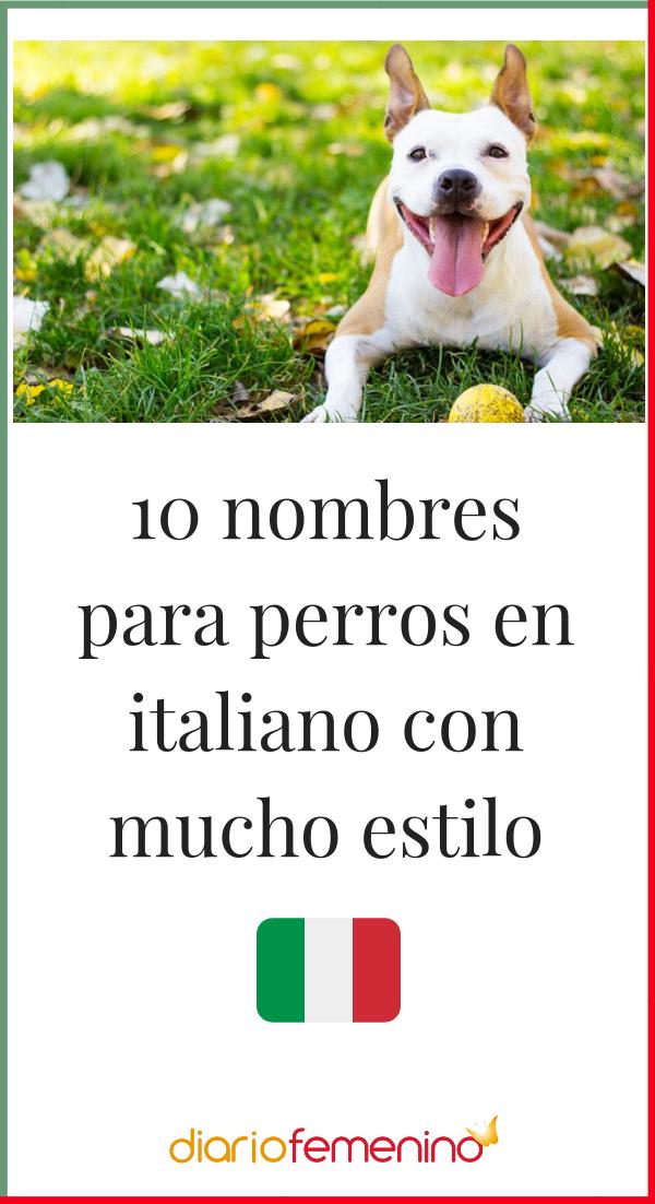 10 Nombres Para Perros En Italiano Con Mucho Estilo Nombres Para Perro Hembra Nombres Para Perros Machos Nombres Para Mascotas