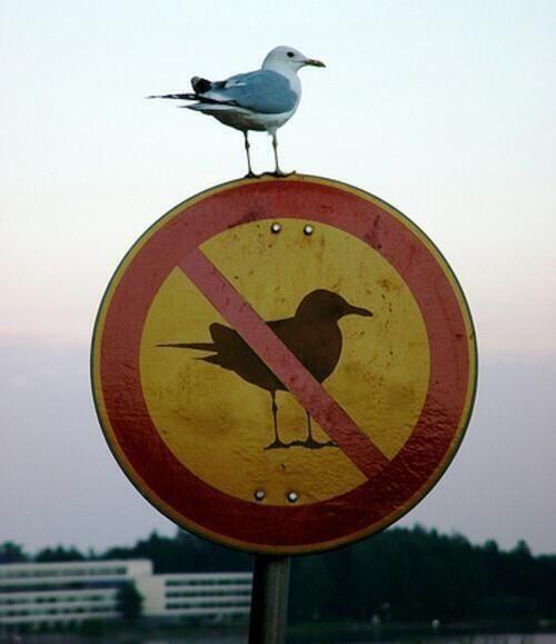 Funny Bird On No Birds Sign