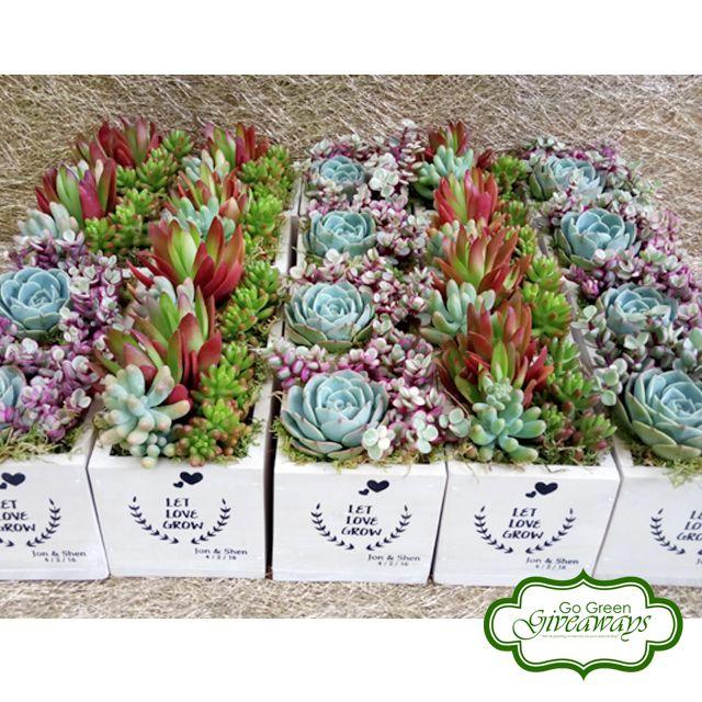 Succulents Arrangement Wedding Favors Tagaytay Wedding Let Love