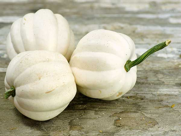 Long Type Bottle Gourd Seed Cucurbita Pumpkin ~1 Pack 6 Seed~ Rare ☆