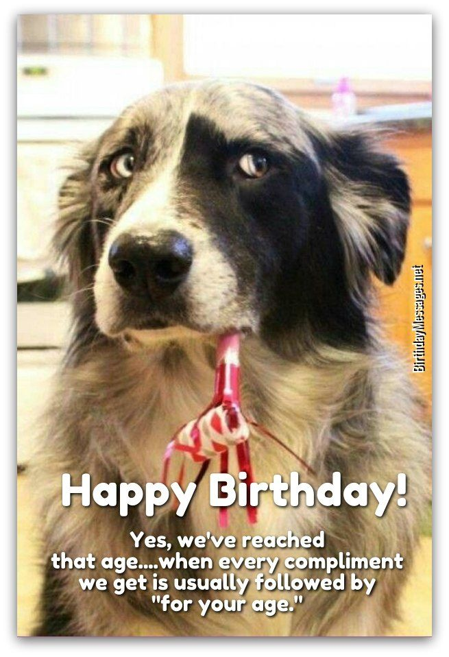 Download Free 170 Funny Birthday Wishes For Adults Funny Animals