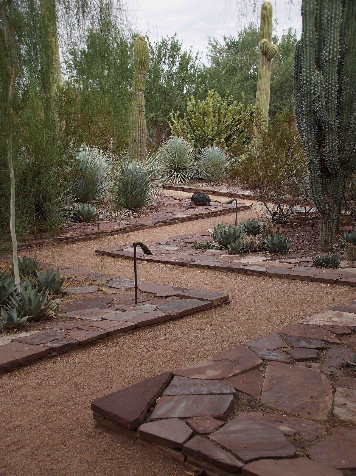 Piece of Eden: Four Things About The Phoenix Desert Botanical Garden #botanicgarden