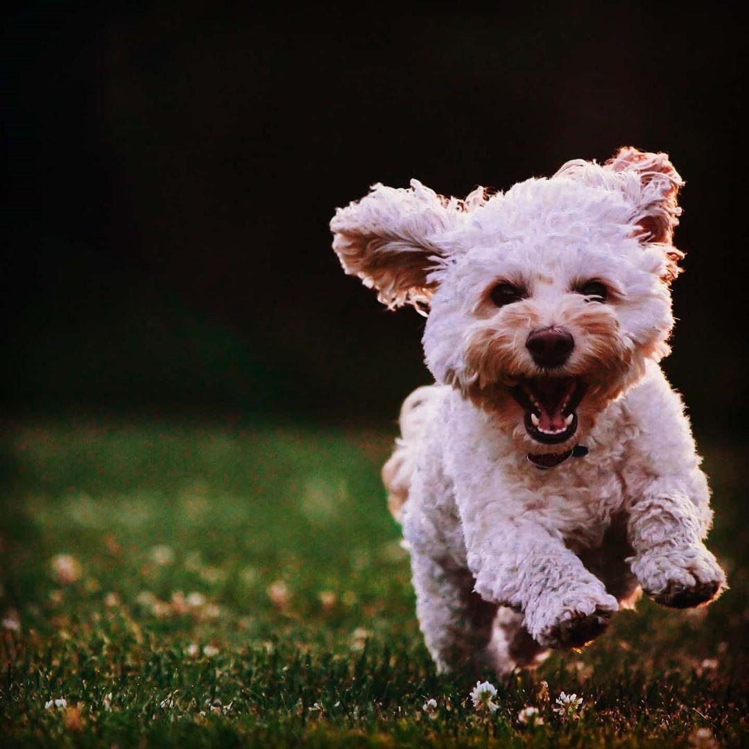 Hiiiii Ahhhhh Cutepetonearth Pet Pets Cute Cutepets Cutepeclub Pretty Lovepets Petstagram 9gag Kawai In 2020 Dog Breeds Short Haired Dog Breeds Dogs