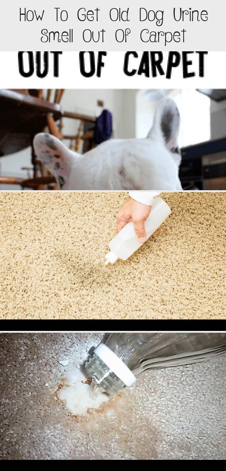 How to get old dog urine smell out of carpet in 2020 dog