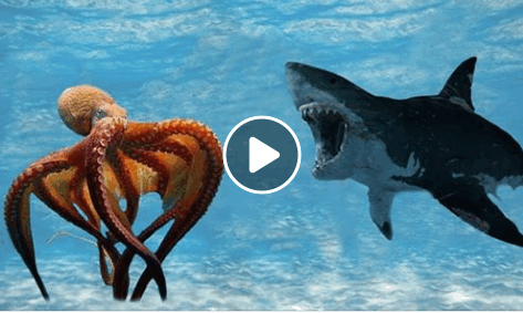 Incredible Fight! Mega Shark Vs Giant Octopus | National ...
