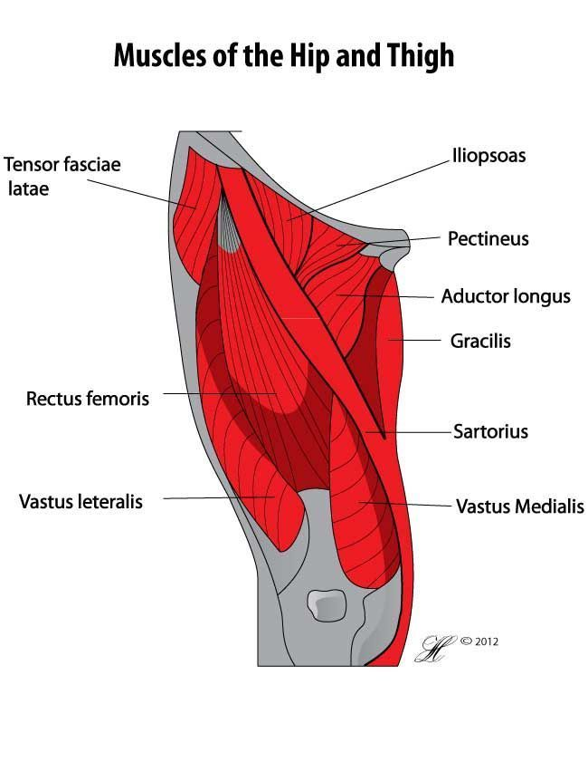 What Is Tight Hip Flexors New Ebook Released Online To Download If