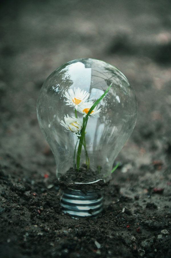 Shine Blooming Bulb Photography Nature Flowers Magical Natural Light