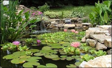 1000 images about Ponds and Streams on Pinterest Gardens
