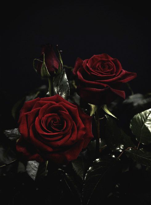 Pin By Luvin Him Secretly On Gothika Black Flowers Beautiful Flowers Flowers