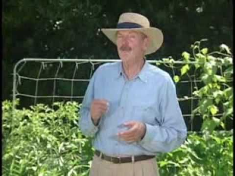 Square Foot Gardening Mistakes Learn from Ours First Square