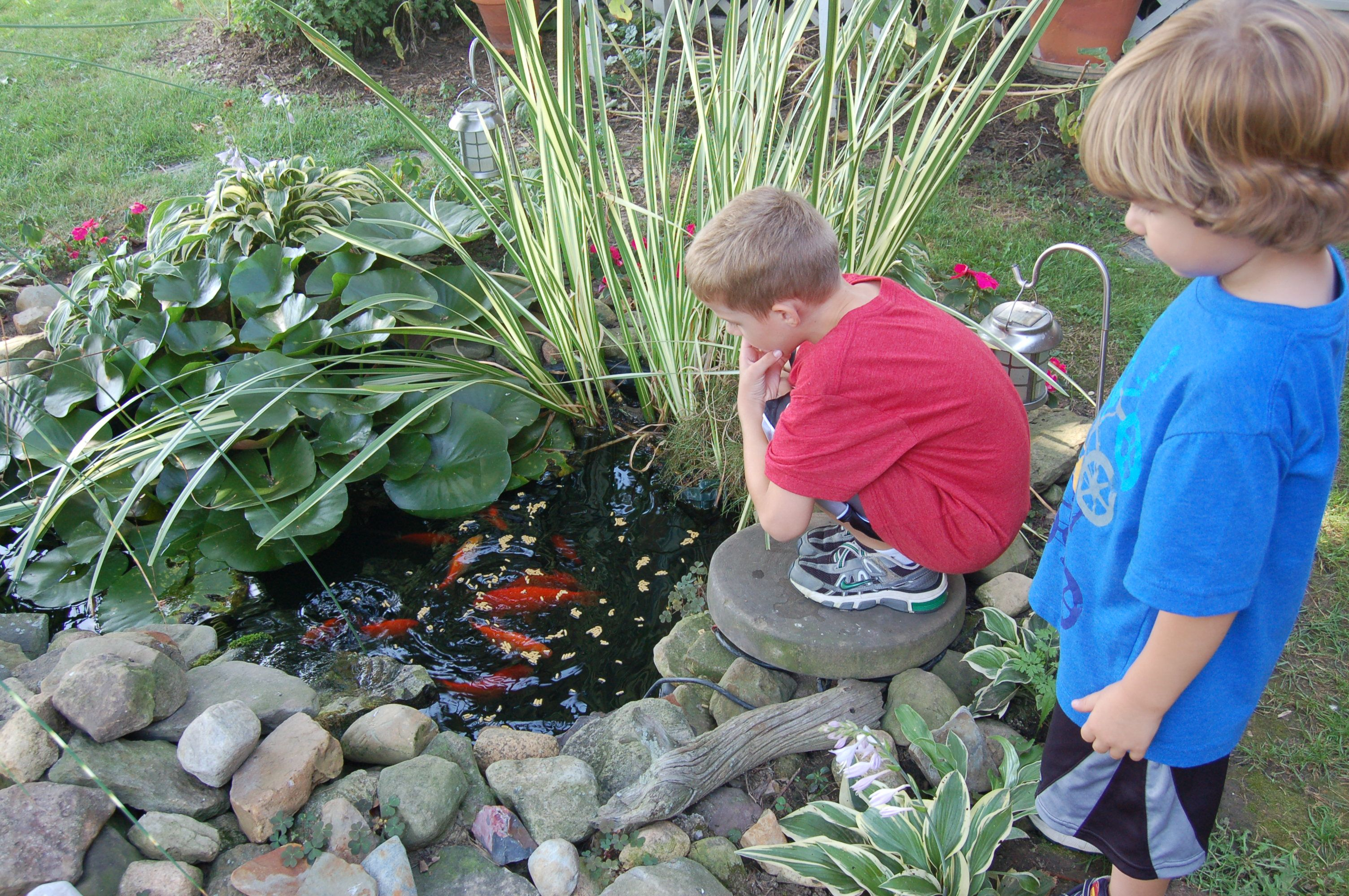 build a small diy frog ponds google search fish pond diy