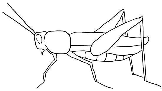 Image result for grasshopper drawing simple