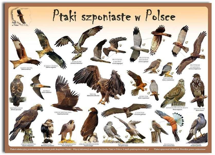 Plakaty Edukacyjne Ptaki W Polsce Szczecin Olxpl B Jak
