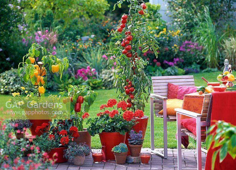 e17a4350a9f86 GAP Photos - Garden & Plant Picture Library - Mexican themed patio ...