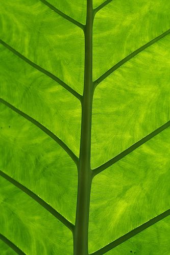 ... green leaf ... photo by Christopher Woo