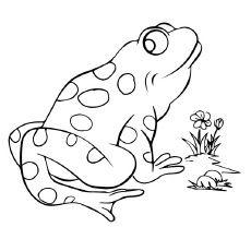 Bullfrog Swimming Animal Coloring Book Page Printable Coloring