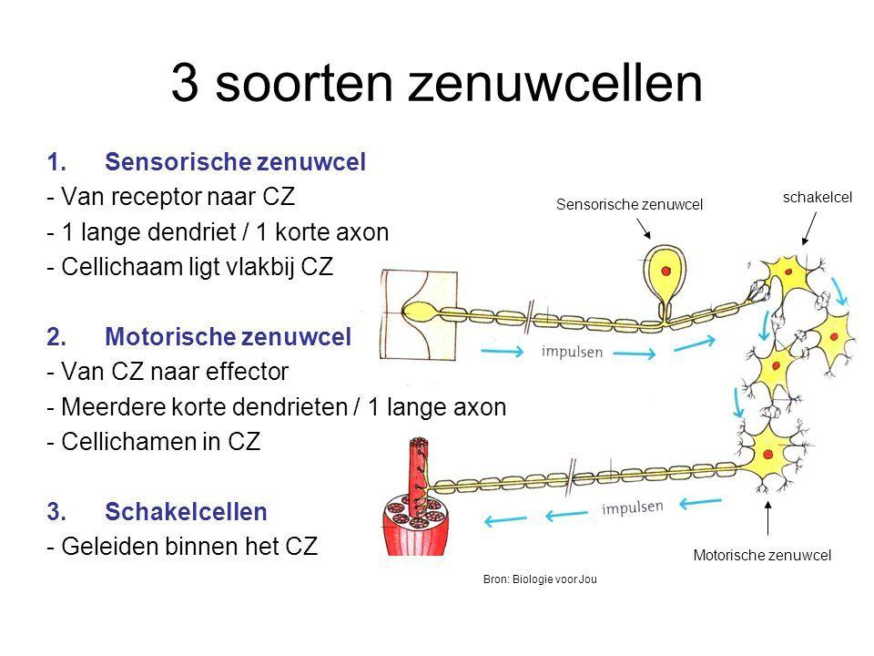 Afbeeldingsresultaat Voor Zenuwcellen Evolutie