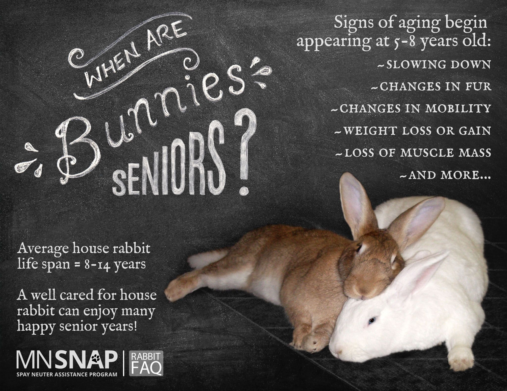 Life expectancy for a house rabbit is between 8 and 14