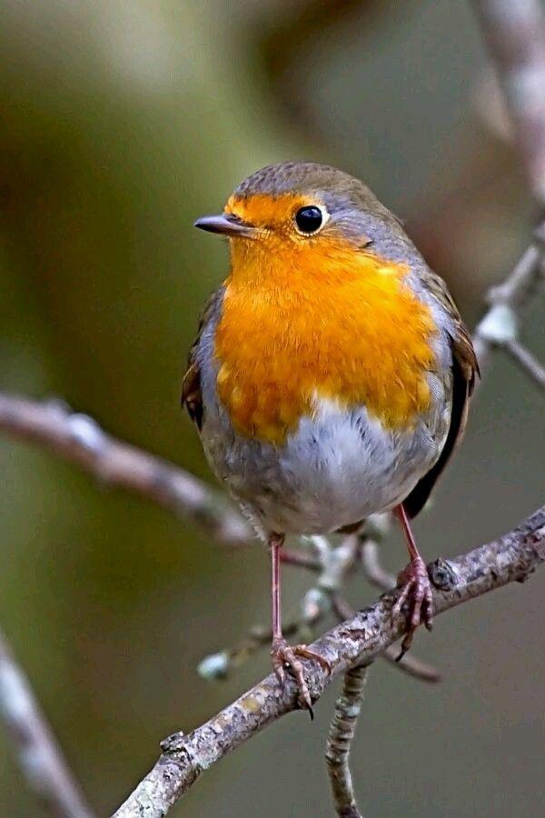 pin von angelika lang auf vogel in 2020  niedliche vögel