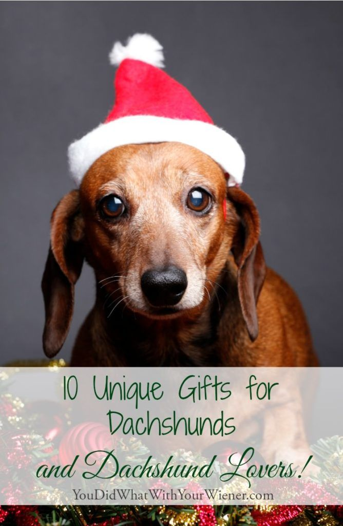 10 Unique Gifts For Dachshunds And Dachshund Lovers Dachshund