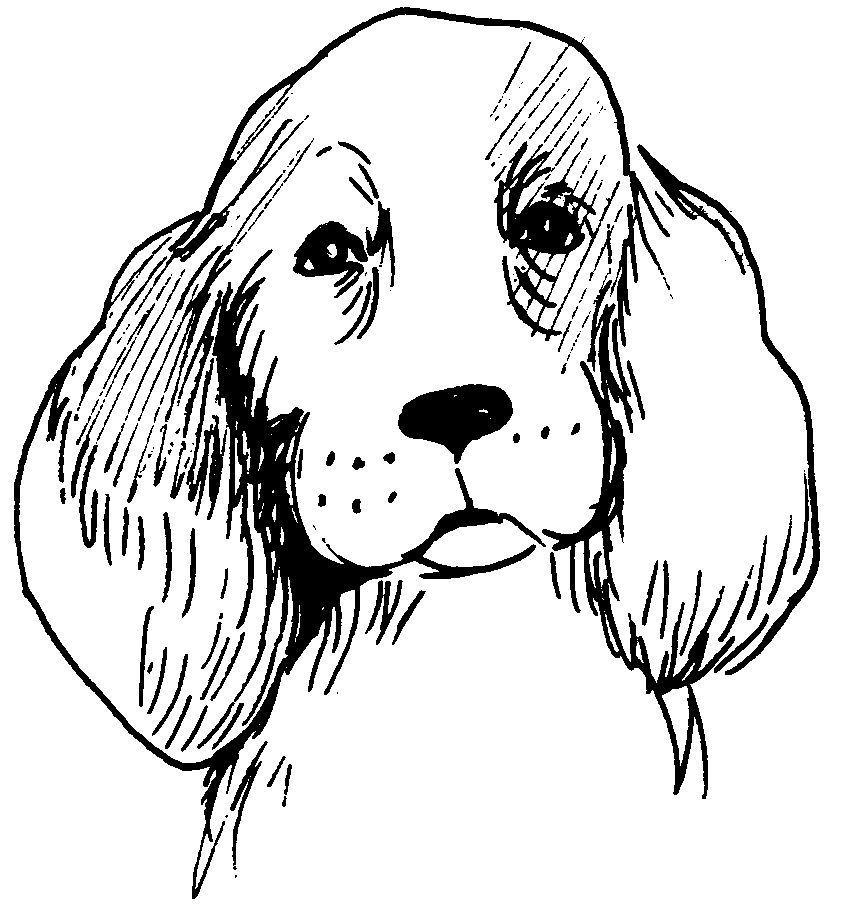 Coloriage De Chien De Compagnie.Dessin Tete De Chien Ou Chiot Animal De Compagnie En 2019 Peinture