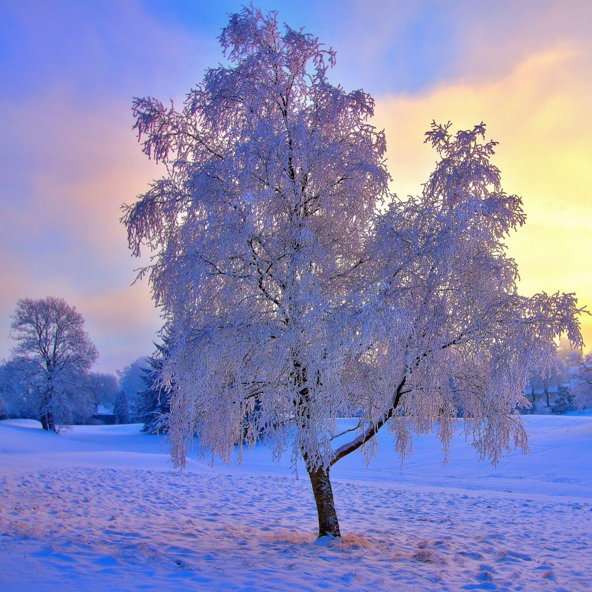 Top Wallpaper Mac Winter - fbf2339d477d3ecf4b7204989f2f9273  Perfect Image Reference_30784.jpg