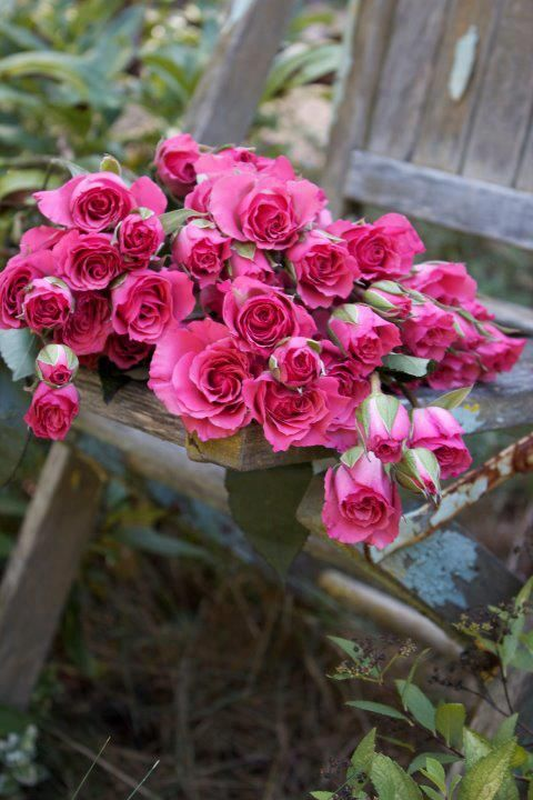 Garden Roses ✿⊱╮