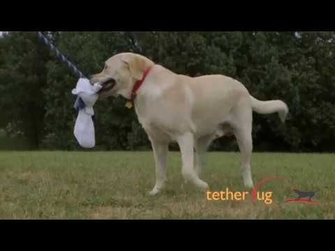 Tough Outdoor Tug Toys For Big Dogs 1 Large Dog Toy Tether