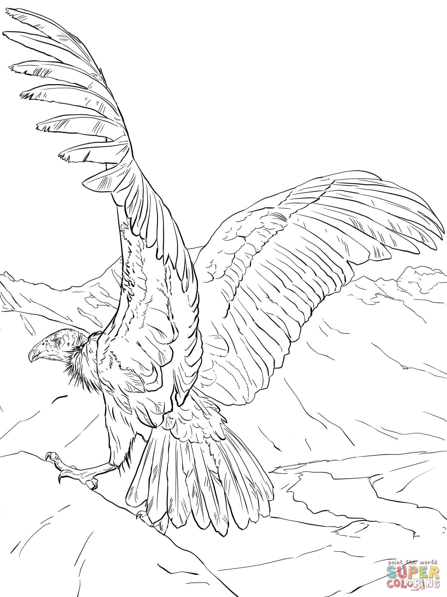 Cóndor andino | Super Coloring | dibujos | Pinterest | Cóndor andino ...