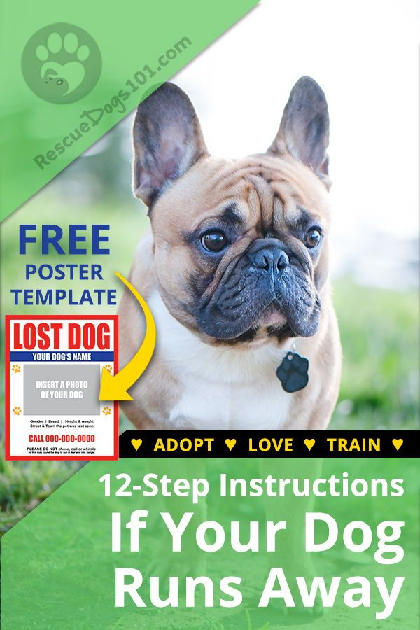 Lookbook PuppyCon — DOG & CO. Dogs, Lookbook, Golden