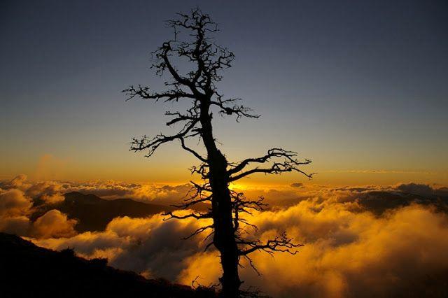 SERRANIA DE RONDA, naturaleza: pinsapo muerto y atardecer