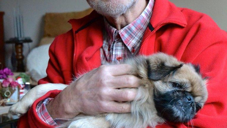 Ein Kranker Hund Kann Ein Glucksfall Sein Tierheim Hunde Und Tiere