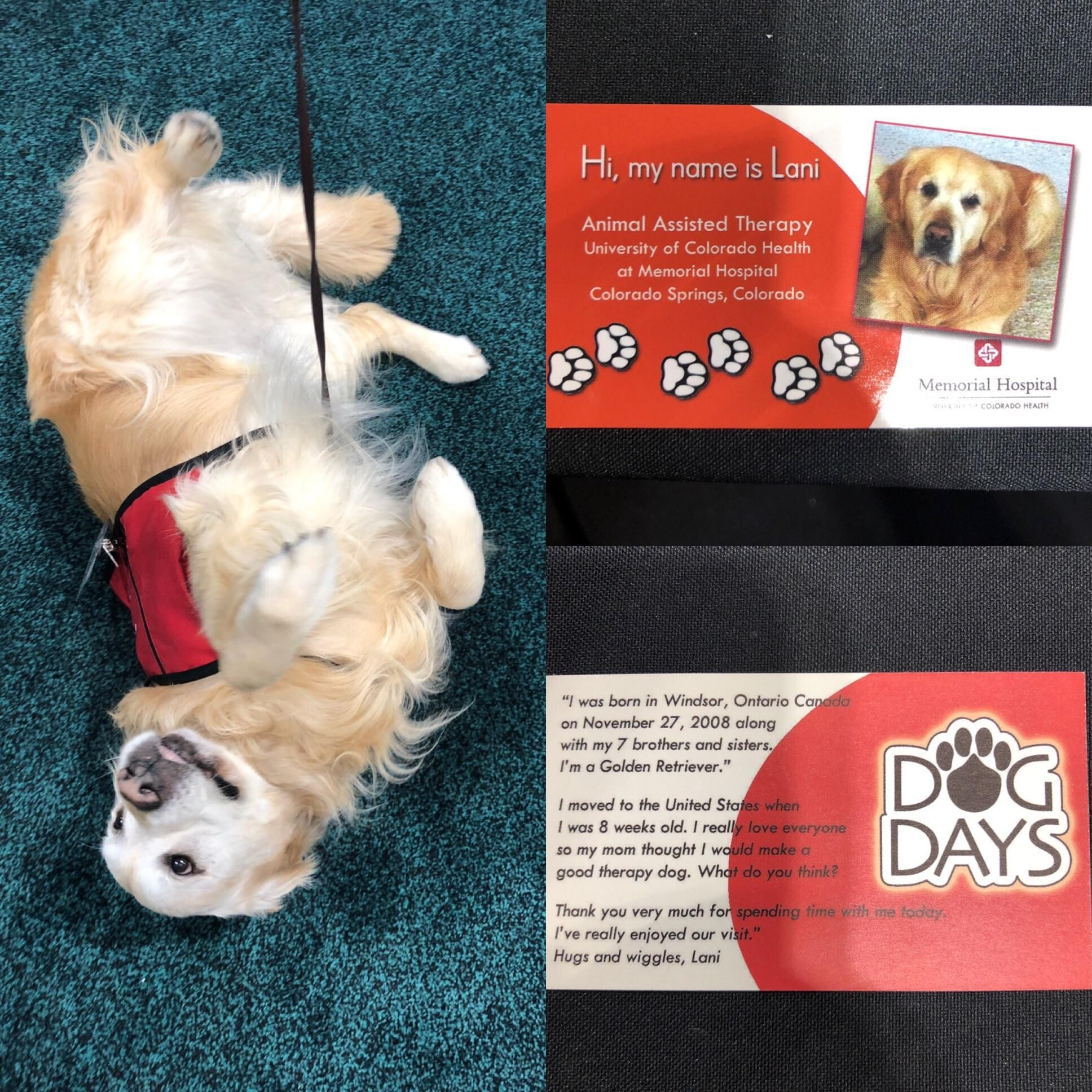 Today I Met Lani A Therapy Dog With His Own Business Cards Https