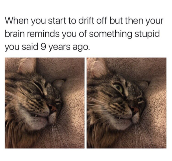 15 Moments When Relatable Cat Memes Made You Giggle Lols