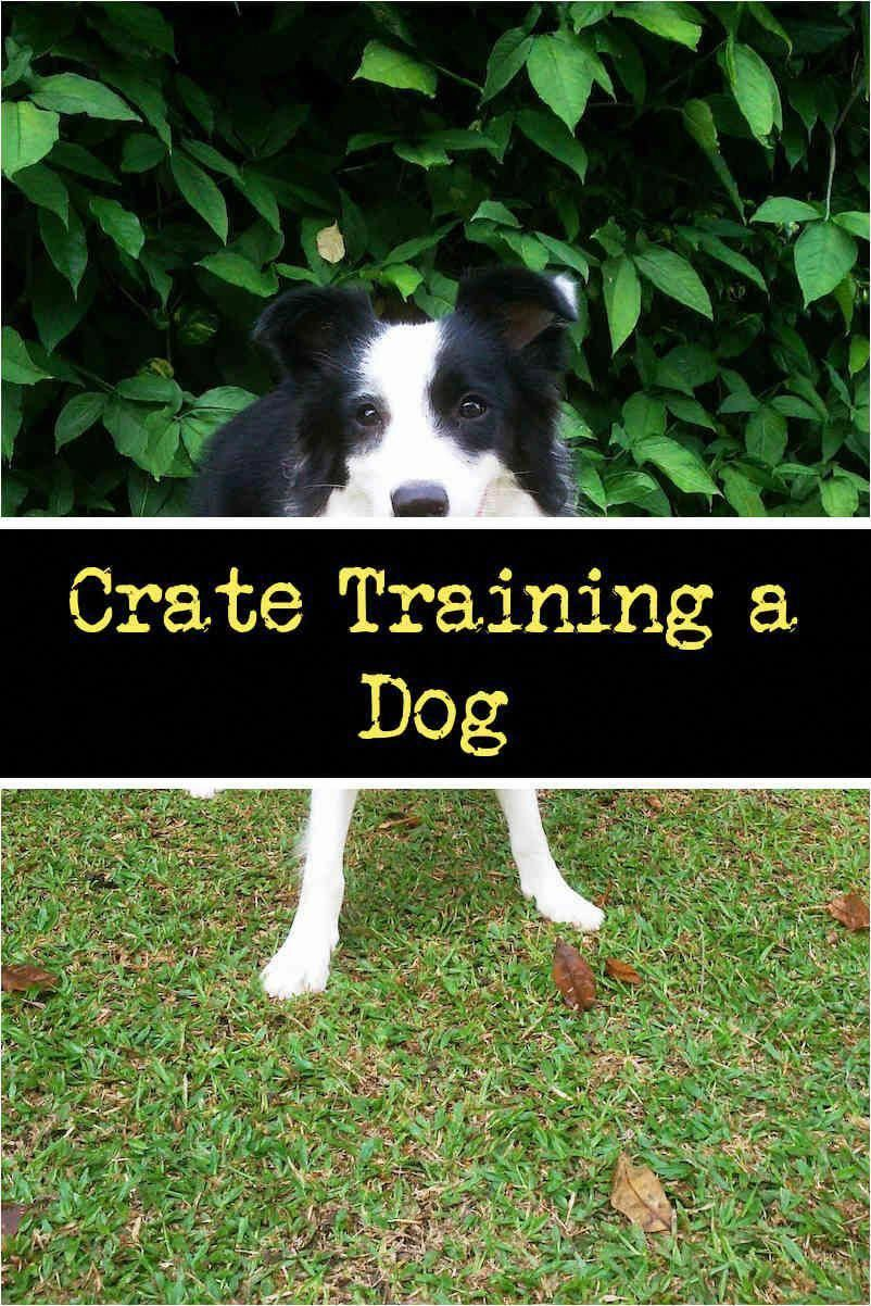 Latest Guide And Techniques For Command For Dog Training For