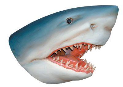 Shark Head Wall Mount Statue In 2020