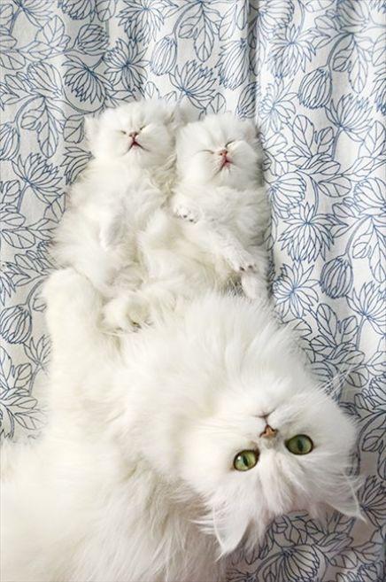 Beautiful Cats Facebook Beautiful Tuxedo Cats Cute Cats Kittens