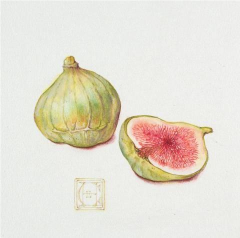 Hamilton Ficus carica.jpg (480×476)