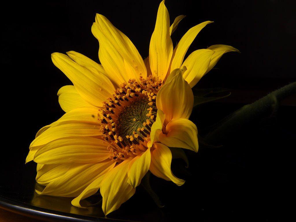 So a sunflower flowersblack pinterest sunflowers and flowers