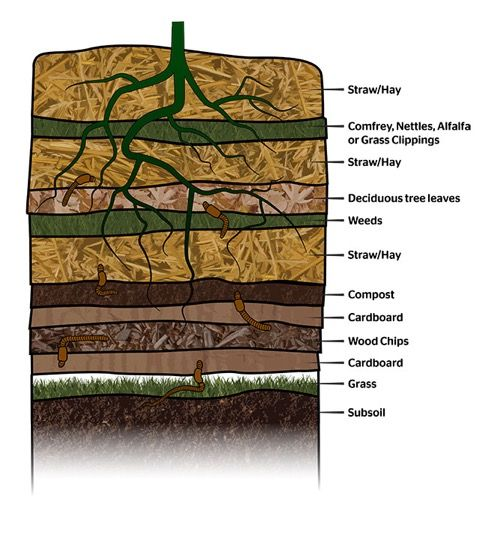 Grow Hack Plant Based Permaculture Layering For Healthy Soils