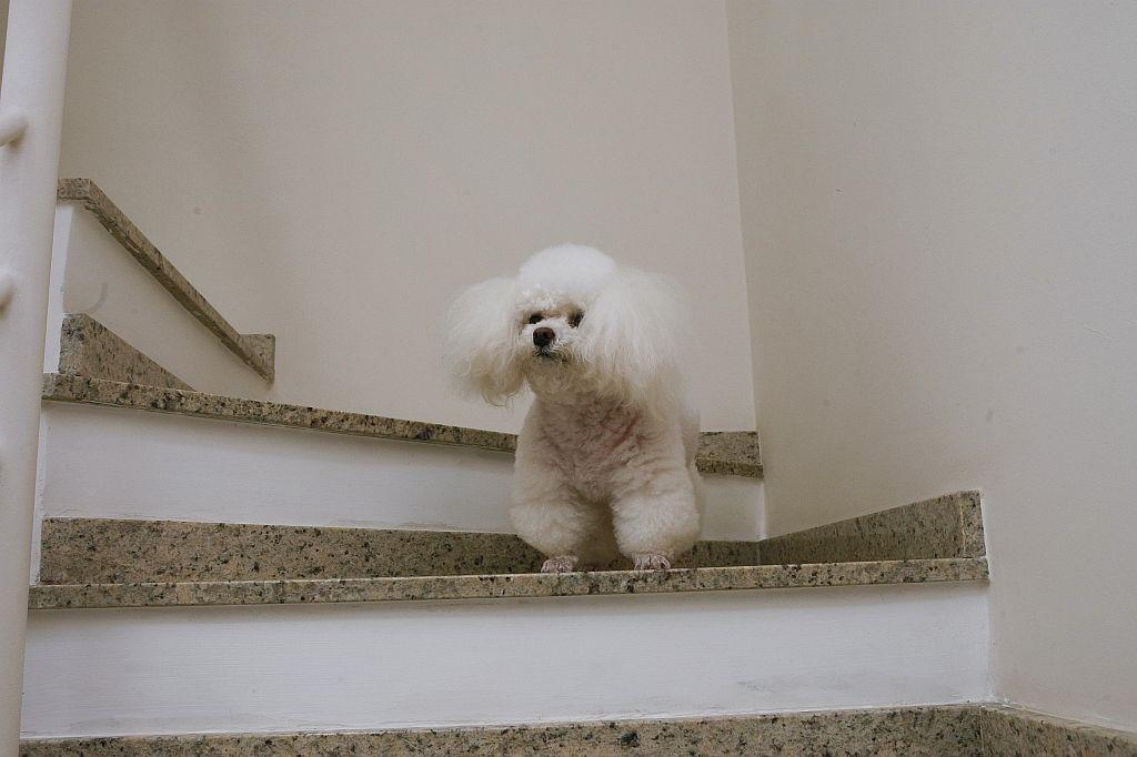 Resultado de imagem para animais nas escadas