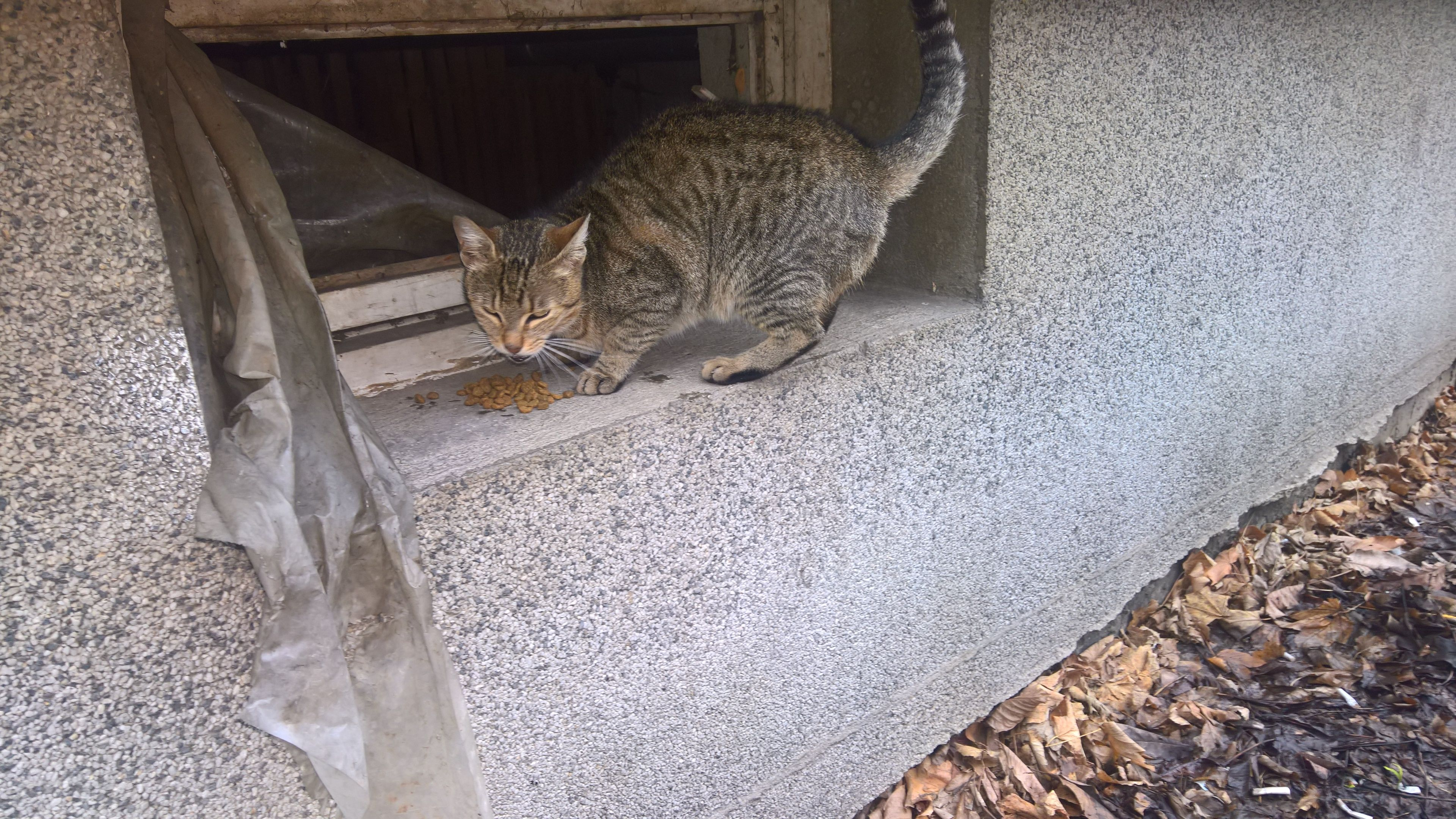 Marija Saved A Kitten Lilly She Was Only A Few Weeks Old One Of Her Eyes Was Closed And She Wasn T Able To Eat On Her Own E Cat Help Cats