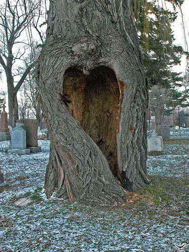 Heart in a tree (natural, not enhanced) ~ Cimetière - Cimetary, Notre-Dame-des-Neiges, Montréal, Québec, Canada