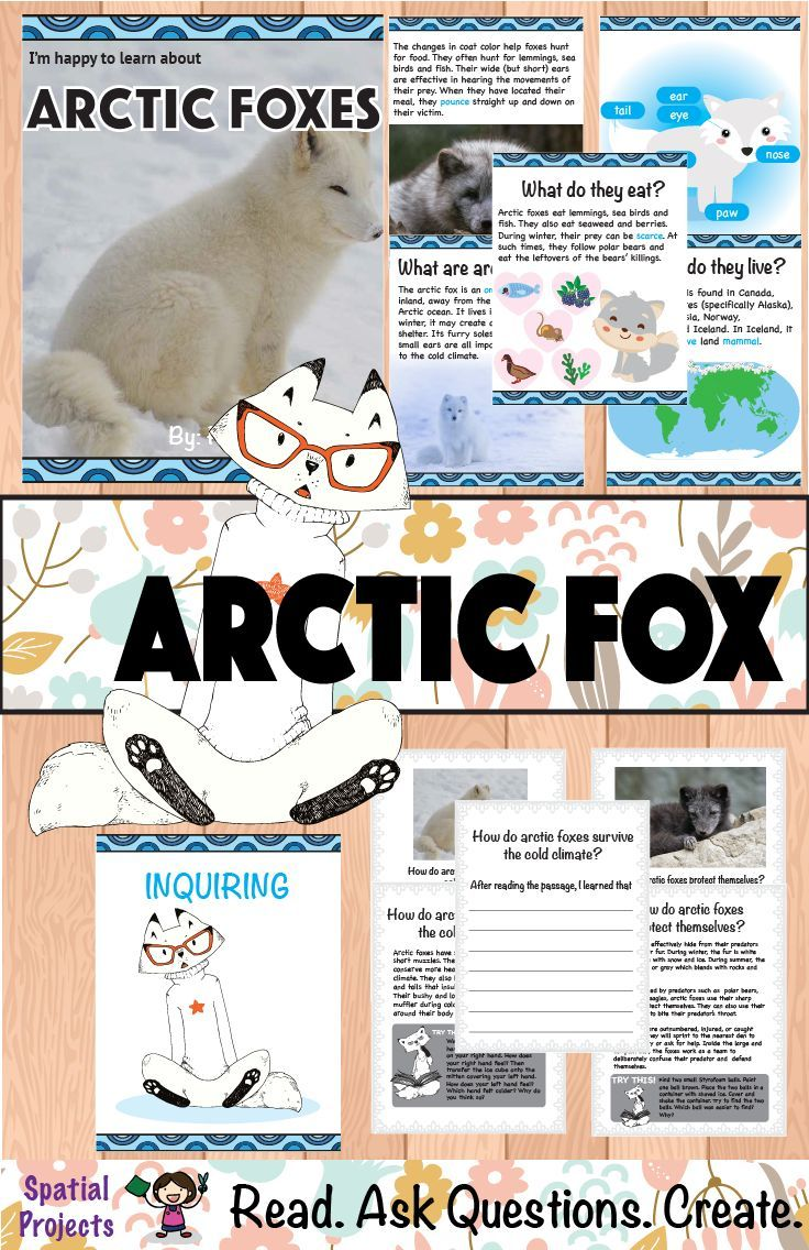 All About Arctic Foxes Nonfiction Animal Writing | Animal writing, Fox  facts for kids, Arctic fox